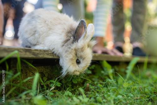 Cute little pet rabbit peeking from wooden terrace