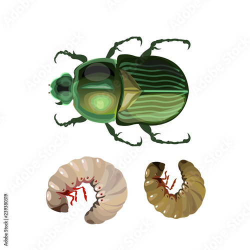 Canvas-taulu Rose chafer vector