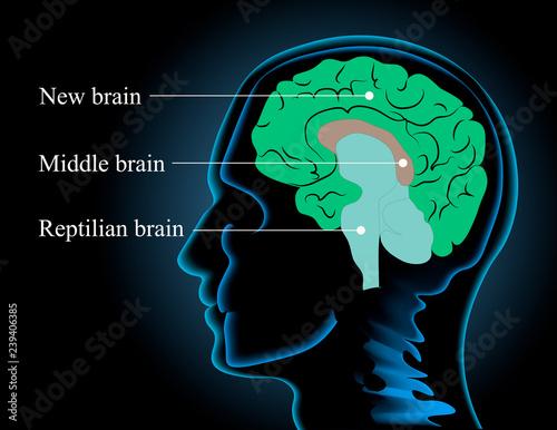 Neuroscience vector illustration Fototapeta