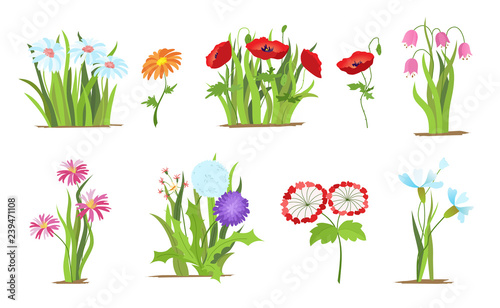 Valokuva Set of wild forest and garden flowers