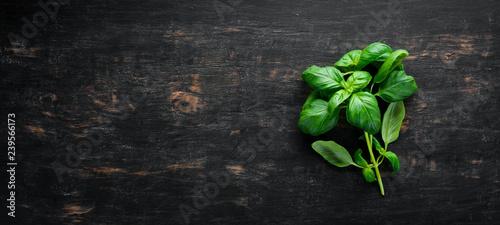 Cuadros en Lienzo Fresh basil and spices