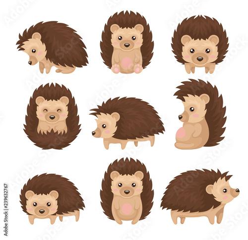 Fototapeta Cute hedgehog in various poses set, prickly animal cartoon character with funny
