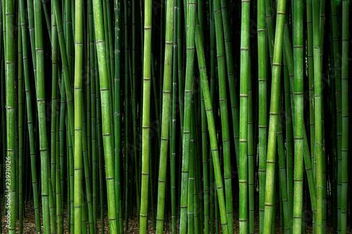 Fototapeta premium wzór lasu bambusowego