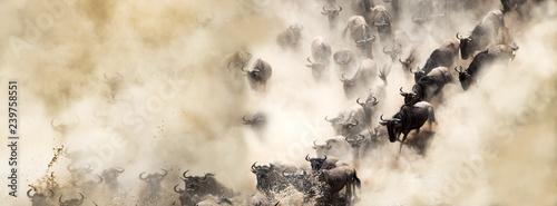 Fotografie, Obraz Dusty Wildebeest River Crossing Web Banner