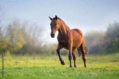 Tableau sur Toile Horse in motion in autumn landscape