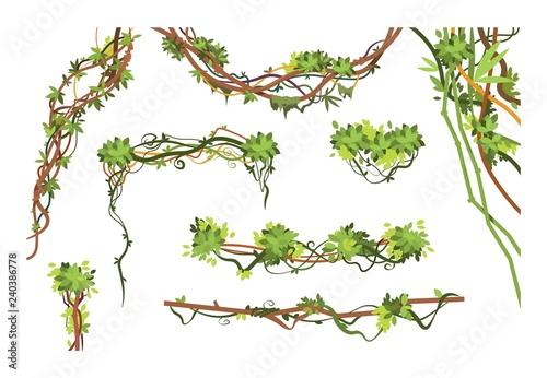 Obraz na płótnie Jungle vine branches