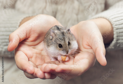 the child holds in his hands a hamster.