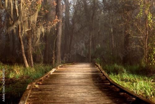Fototapeta Admiring morning sun rays highlighting a boardwalk in a foggy Louisiana swamp land