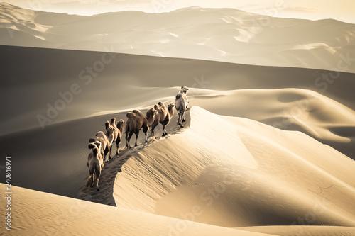 desert camels team Fototapete