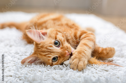 Canvas Print Ginger kitten with toy