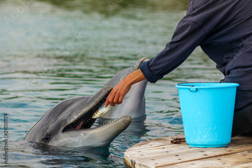 Dolphin feeding and training with instructor in oceanarium dolphinaris