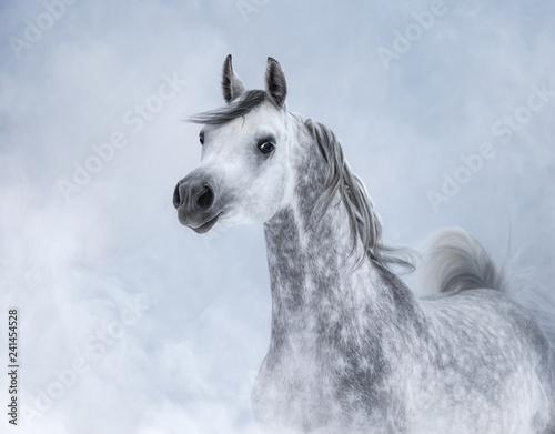 Fototapeta premium Koń arabski w lekkim dymie.