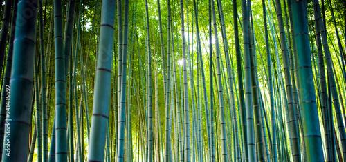 Bamboo Groves, bamboo forest in Arashiyama, Kyoto Japan.
