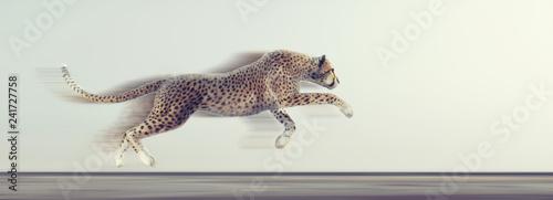 Obraz na płótnie A beautiful cheetah running
