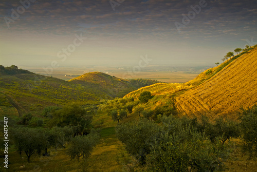 Obraz na płótnie Olive grove, Gargano, Apulia, Italy