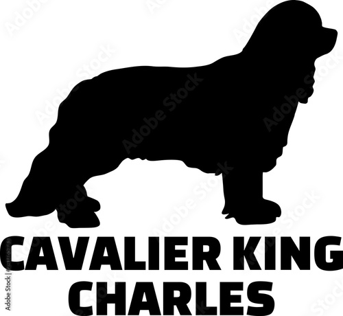 Valokuvatapetti Cavalier King Charles silhouette name