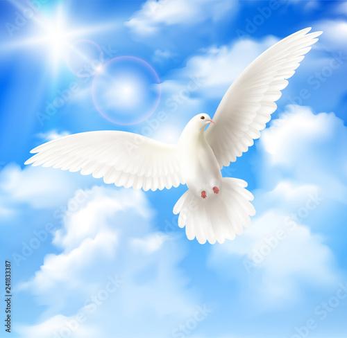 Stampa su Tela White Pigeon Background