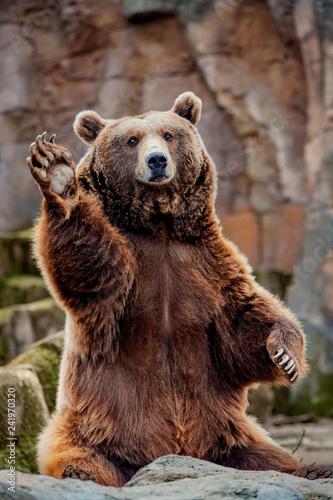 Canvas Print Big bear greeting