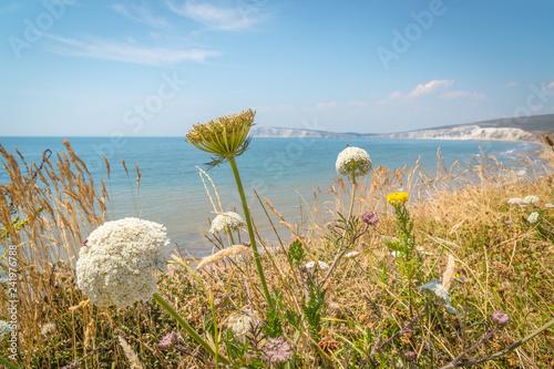 Obraz na płótnie View over the freshwater bay of isle of wight island in the UK.
