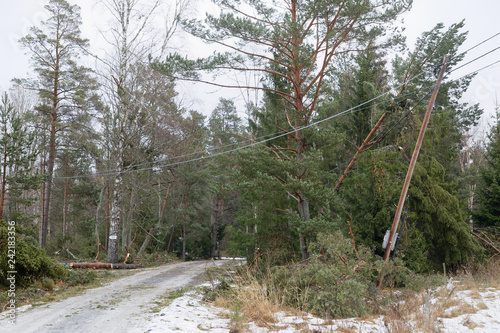 Fototapeta Damaged electric pole and fallen pine trees after the terrible storm Alfrida in