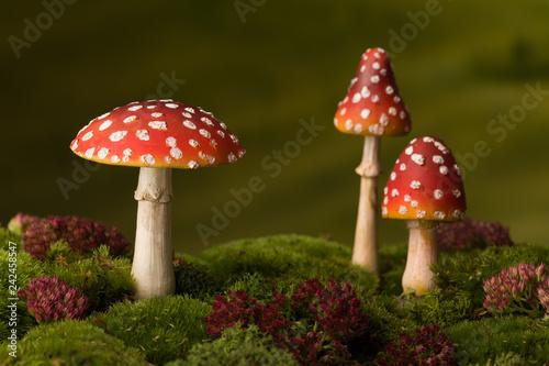 Valokuva Three red toadstools