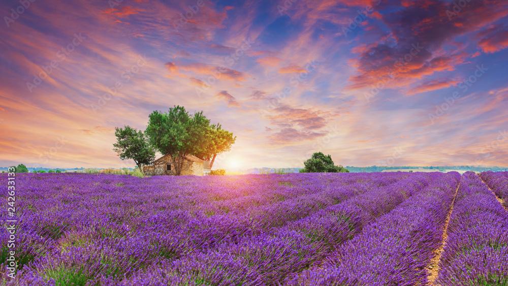Lavender field - Valensole, France - obrazy, fototapety, plakaty