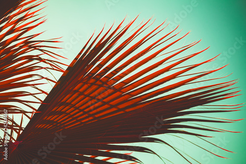 Red palm tree leaves over blue green sky, stylized photo