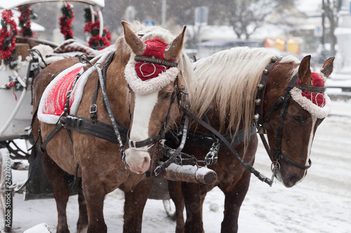 Fotografie, Tablou Decorated Christmas Horses and Carriage