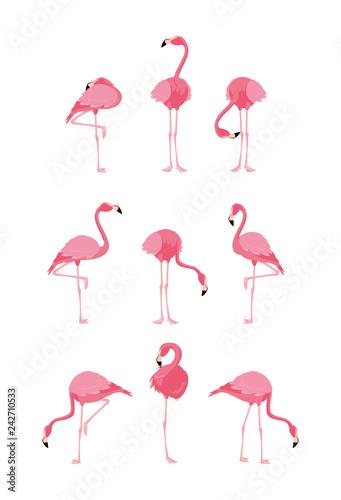 Carta da parati beautiful flamingos birds flock standing