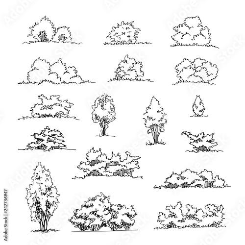 Obraz na płótnie Set of hand drawn architect shrubs, vector sketch, architectural illustration