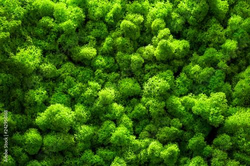 Canvas Print Green moss backgruond close up interior design. top view close up