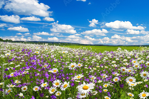 Stampa su Tela spring landscape with flowering flowers on meadow