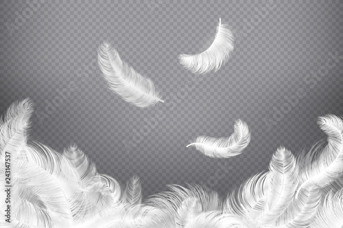Fotografiet White feather background