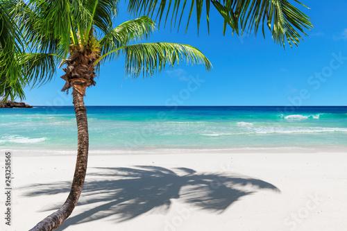 Fototapeta premium Coco palm na piaszczystej plaży i turkusowego morza na wyspie Paradise Jamajka. Moda podróży i koncepcja tropikalnej plaży.