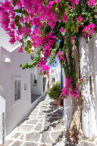 Fototapeta premium Biała aleja z kolorowymi kwiatami oleandrów i białymi domami na Cykladach w lecie, Grecja