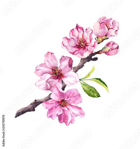 Flowering cherry tree Fototapeta