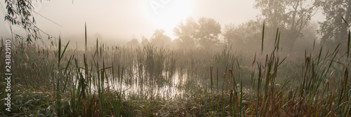 Fotografie, Obraz Dawn in the Marshland. Countryside. Banner for Design.
