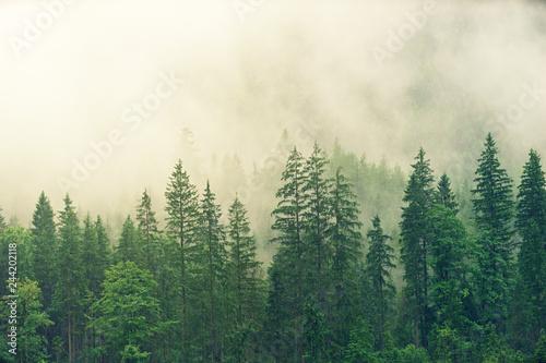 Krajobrazowe arcydzieło premium