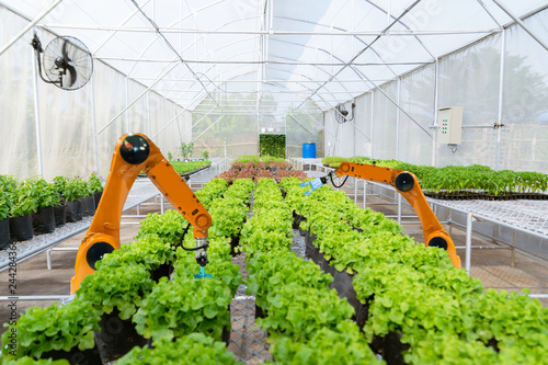 Cuadros en Lienzo Smart robotic farmers harvest in agriculture futuristic robot automation to work