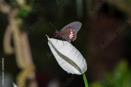 Fototapeta premium motyle