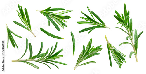 Obraz na plátně Rosemary twig and leaves isolated on white background with clipping path, collec