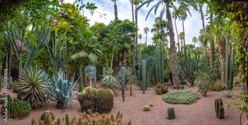 Foto Panorama of The Majorelle Garden is a botanical garden and artist's landscape garden in Marrakech, Morocco