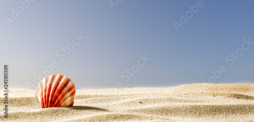 Fotografie, Obraz Seashells on the sand by the sea on a hot sunny day