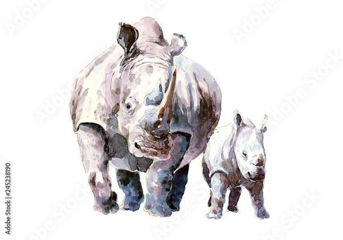 Fototapeta premium Nosorożec z cielakiem w dzikim środowisku. akwarela.