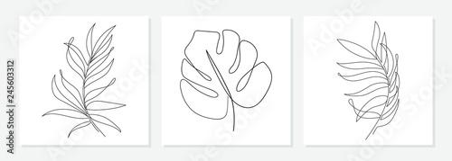 Obraz na płótnie One line drawing vector monstera leaf and palm tree leaves
