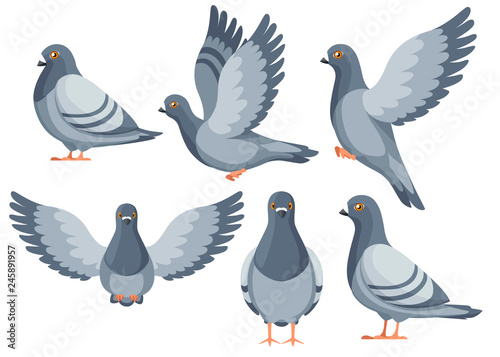 Colorful Icon set of Pigeon bird flying and sitting Fotobehang