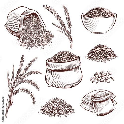 Stampa su Tela Hand drawn rice