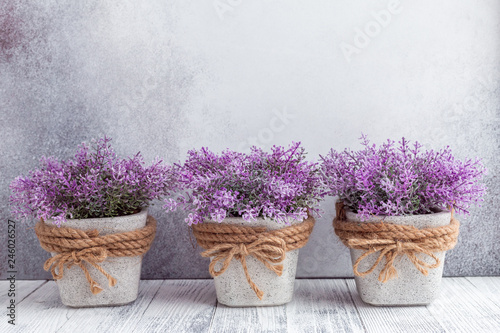 Small purple flowers in gray ceramic pots on stone background Rustic style Copy space