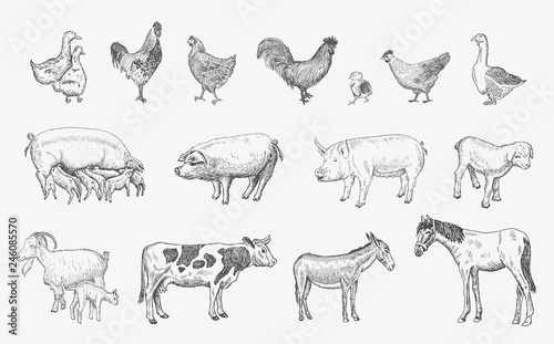 Stampa su Tela Farm Animals set. Vector sketches hand drawn illustration