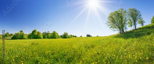 Fotografia Field with dandelions and blue sky